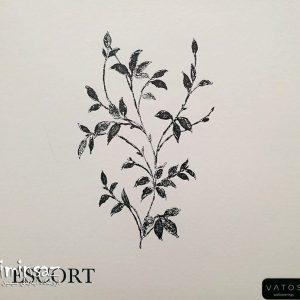 آلبوم کاغذ دیواری اسکورت